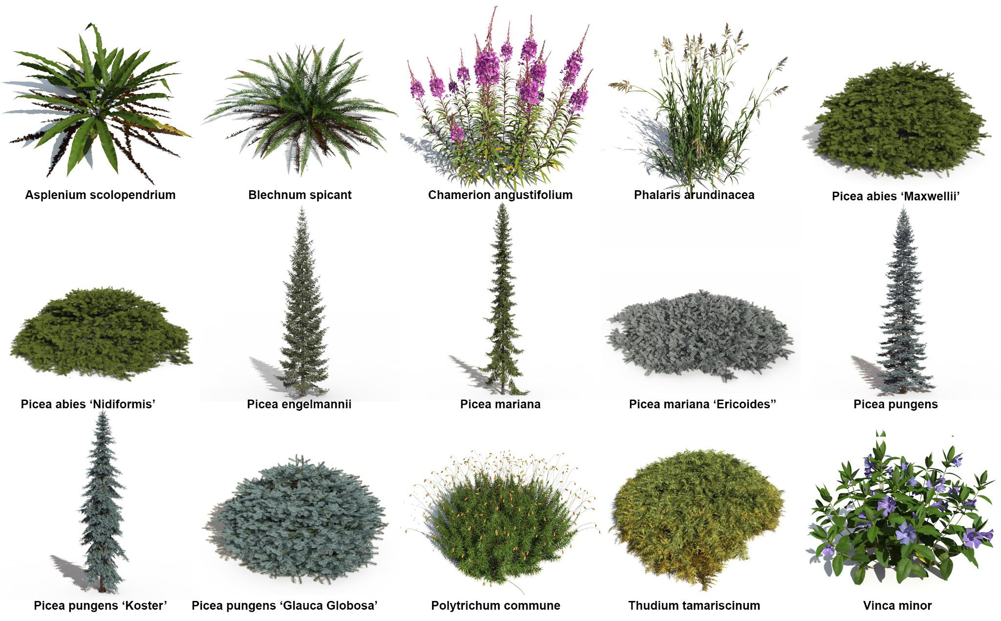 The new PlantCatalog plants of R5