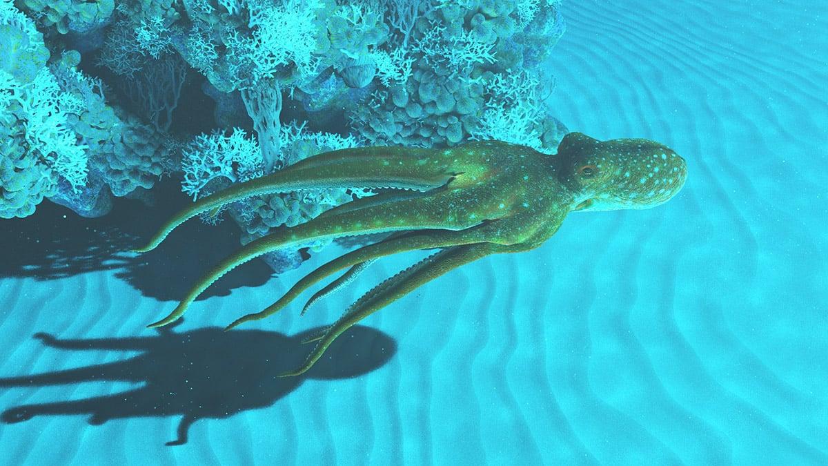 Octopus blog post