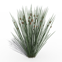 3D model of the Sea rush - Juncus rigidus - from the PlantCatalog, rendered in VUE