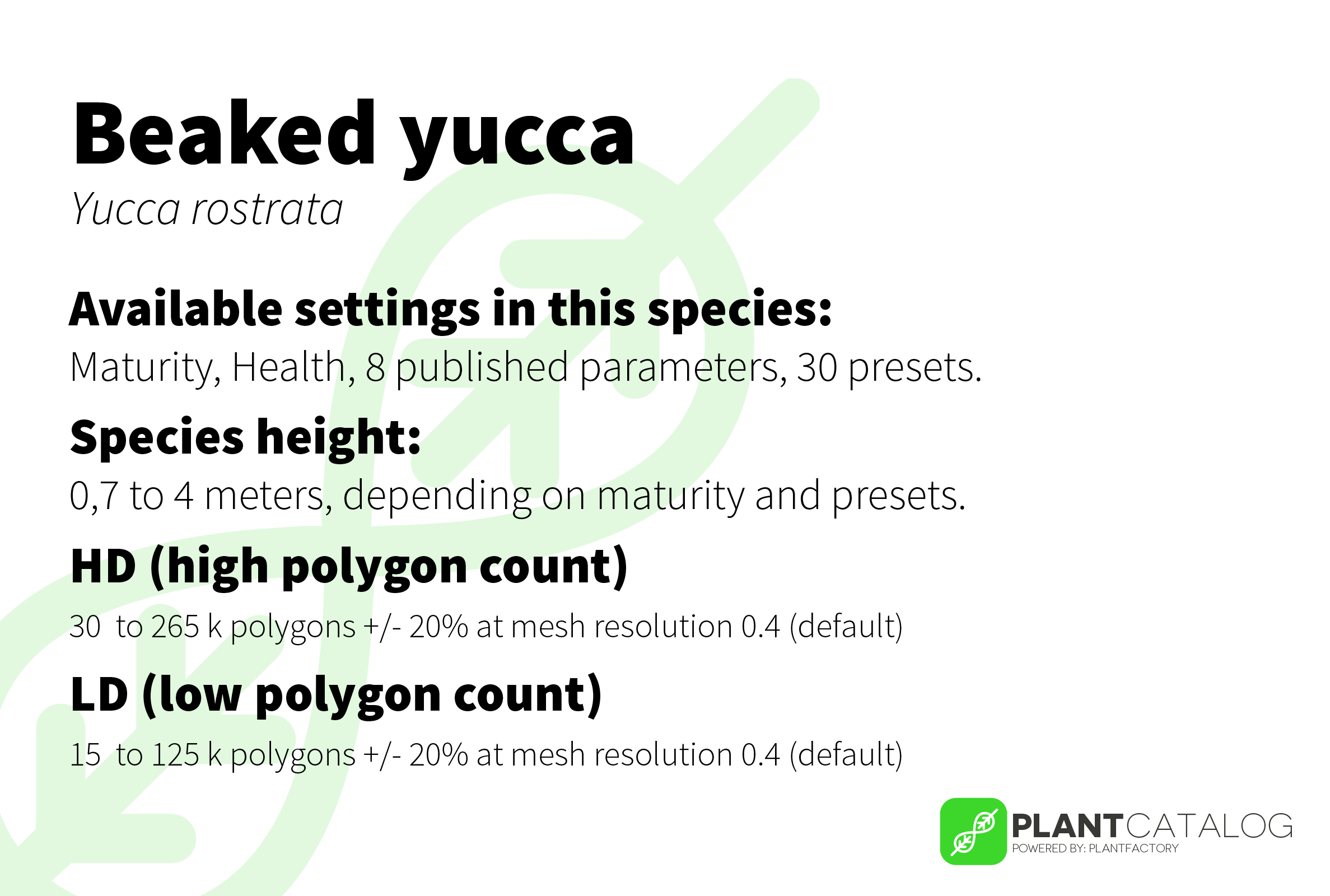Beaked yucca - Yucca rostrata - 3D model specifications