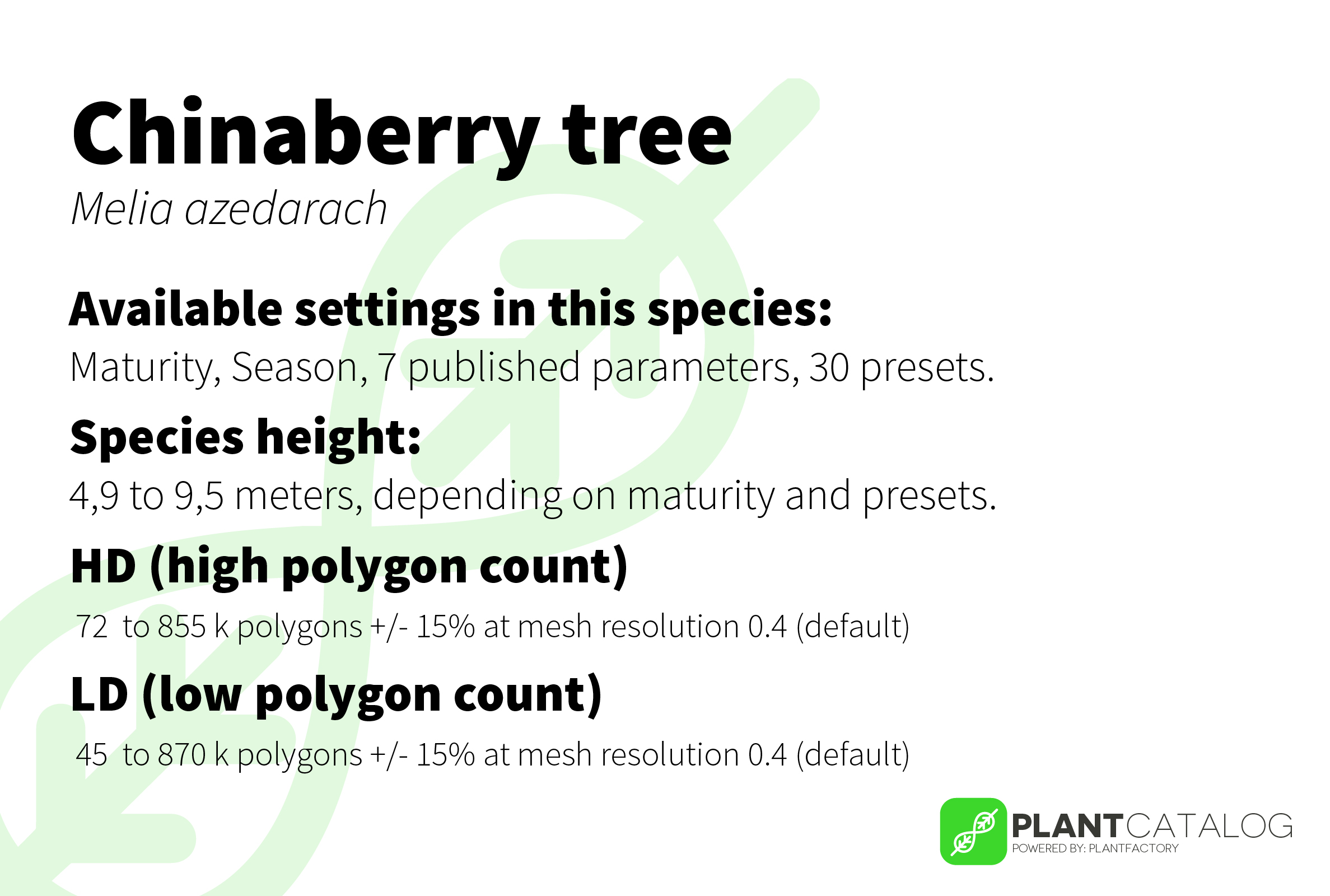 Chinaberry tree - Melia azedarach - 3D model specifications