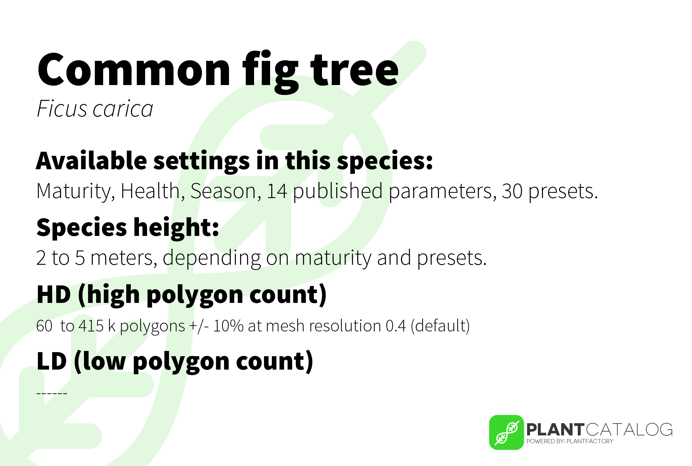 Common fig tree