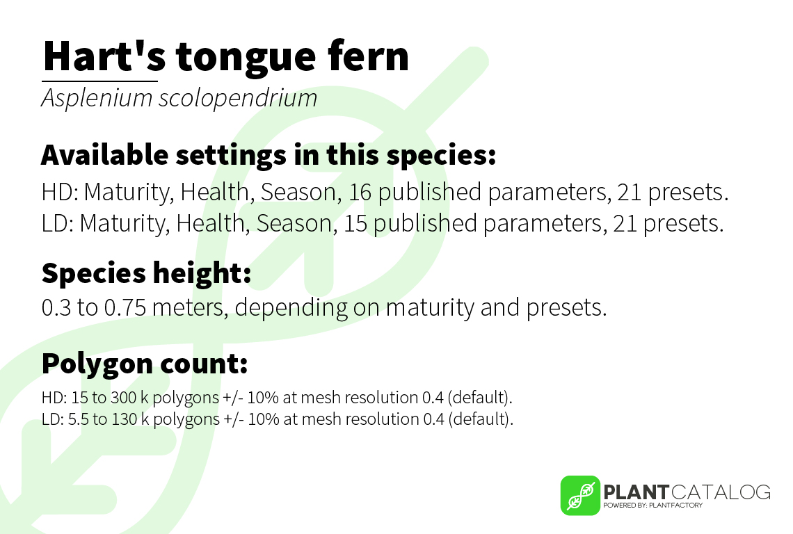Hart's tongue fern - Asplenium scolopendrium - 3D model specifications