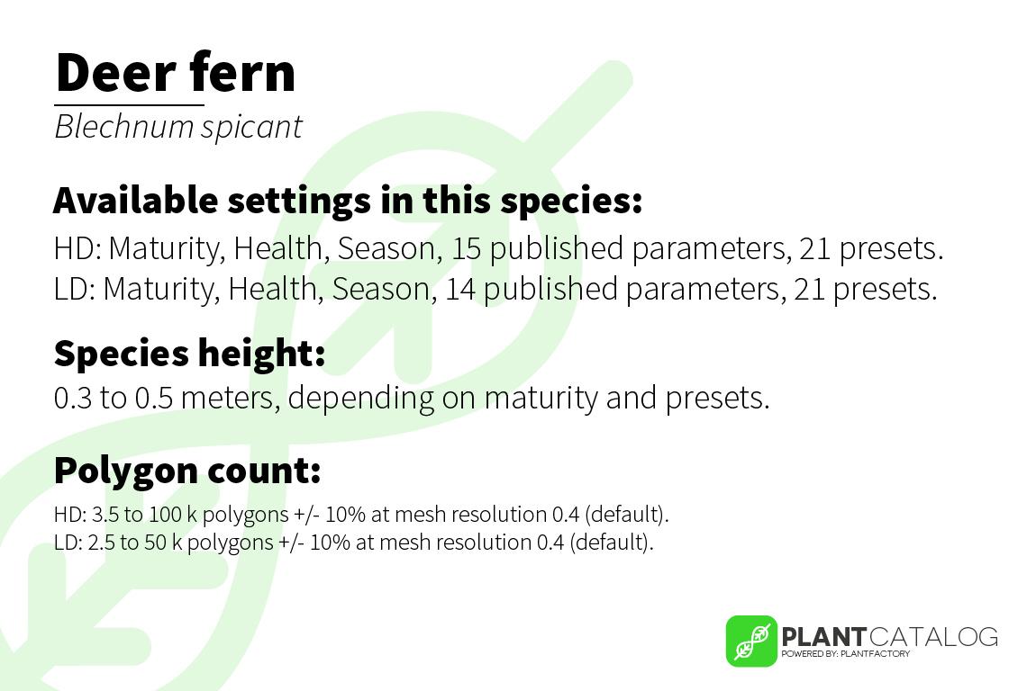 Deer fern - Blechnum spicant - 3D model specifications