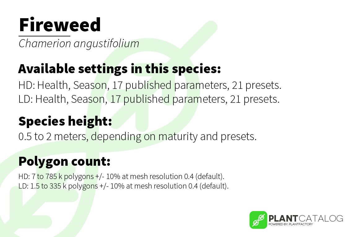 Fireweed - Chamerion angustifolium - 3D model specifications