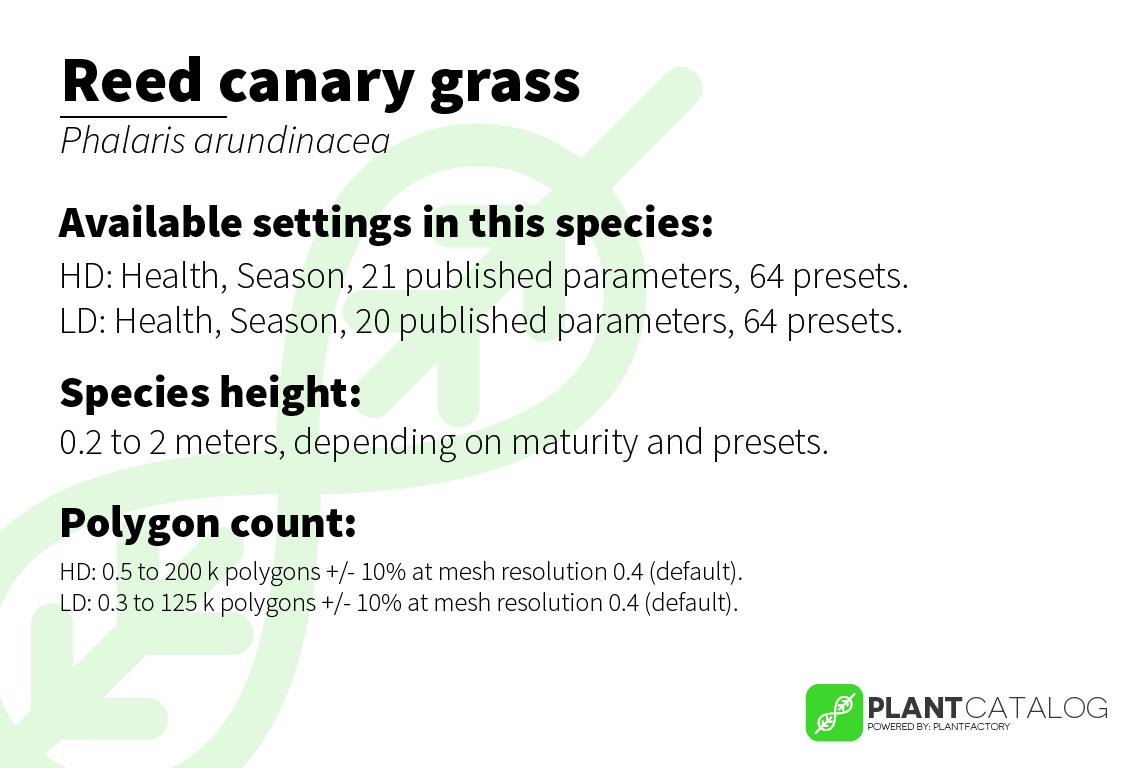 Reed canary grass - Phalaris arundinacea - 3D model specifications