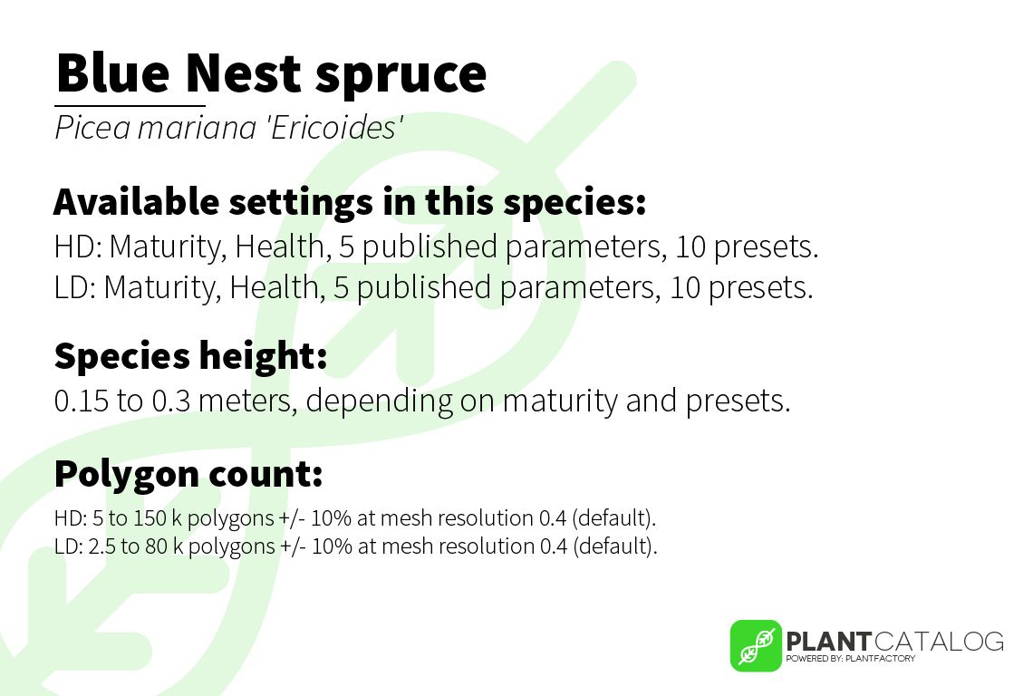 Blue Nest spruce - Picea mariana 'Ericoides' - 3D model specifications