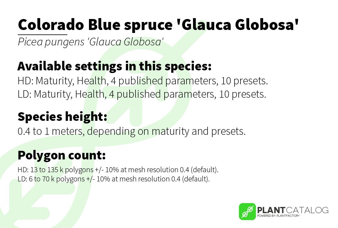 Colorado Blue spruce 'Glauca Globosa' - Picea pungens 'Glauca Globosa' - 3D model specifications
