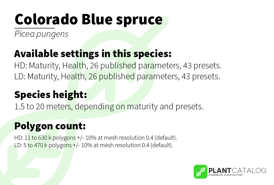 Colorado Blue spruce - Picea pungens - 3D model specifications