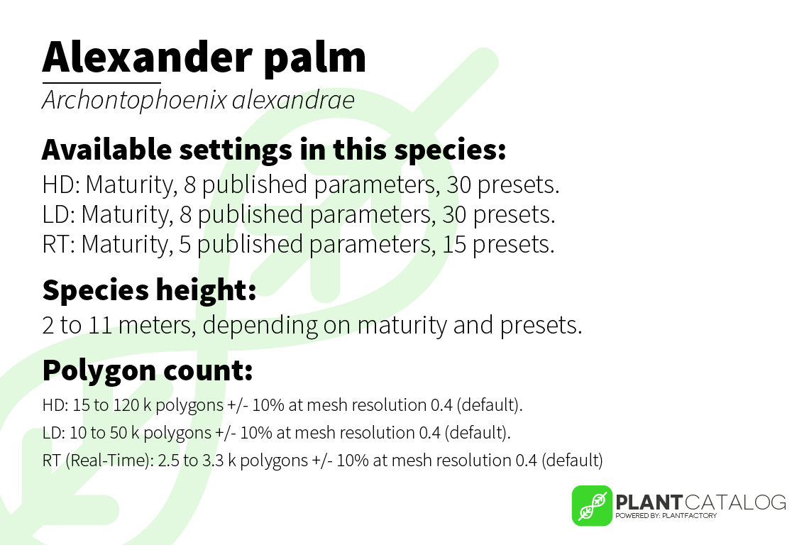 Alexander palm - Archontophoenix alexandrae - 3D model specifications