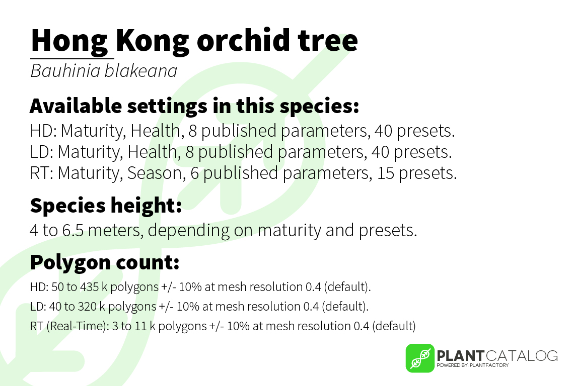 Hong Kong orchid tree - Bauhinia blakeana - 3D model specifications