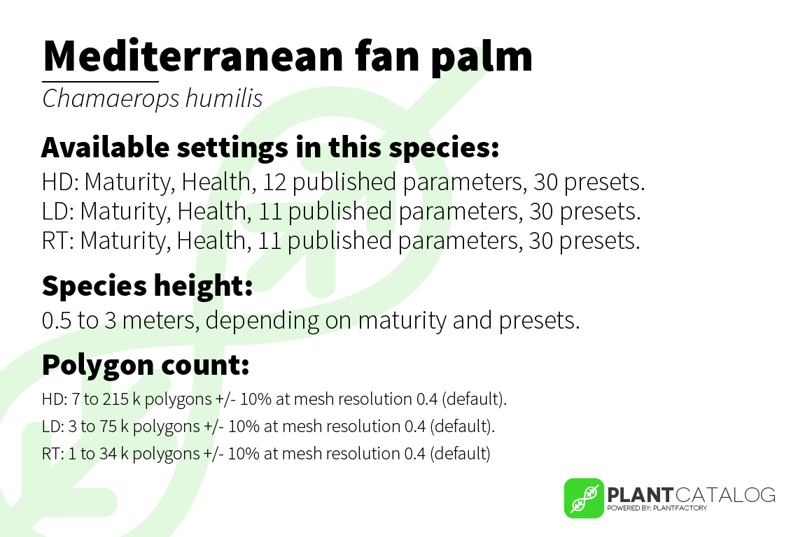 Mediterranean fan palm - Chamaerops humilis - 3D model specifications