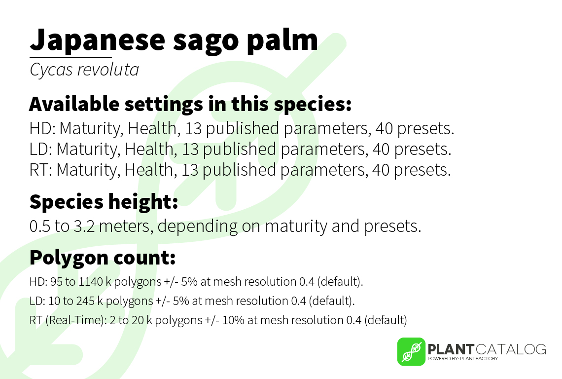 Japanese sago palm - Cycas revoluta - 3D model specifications