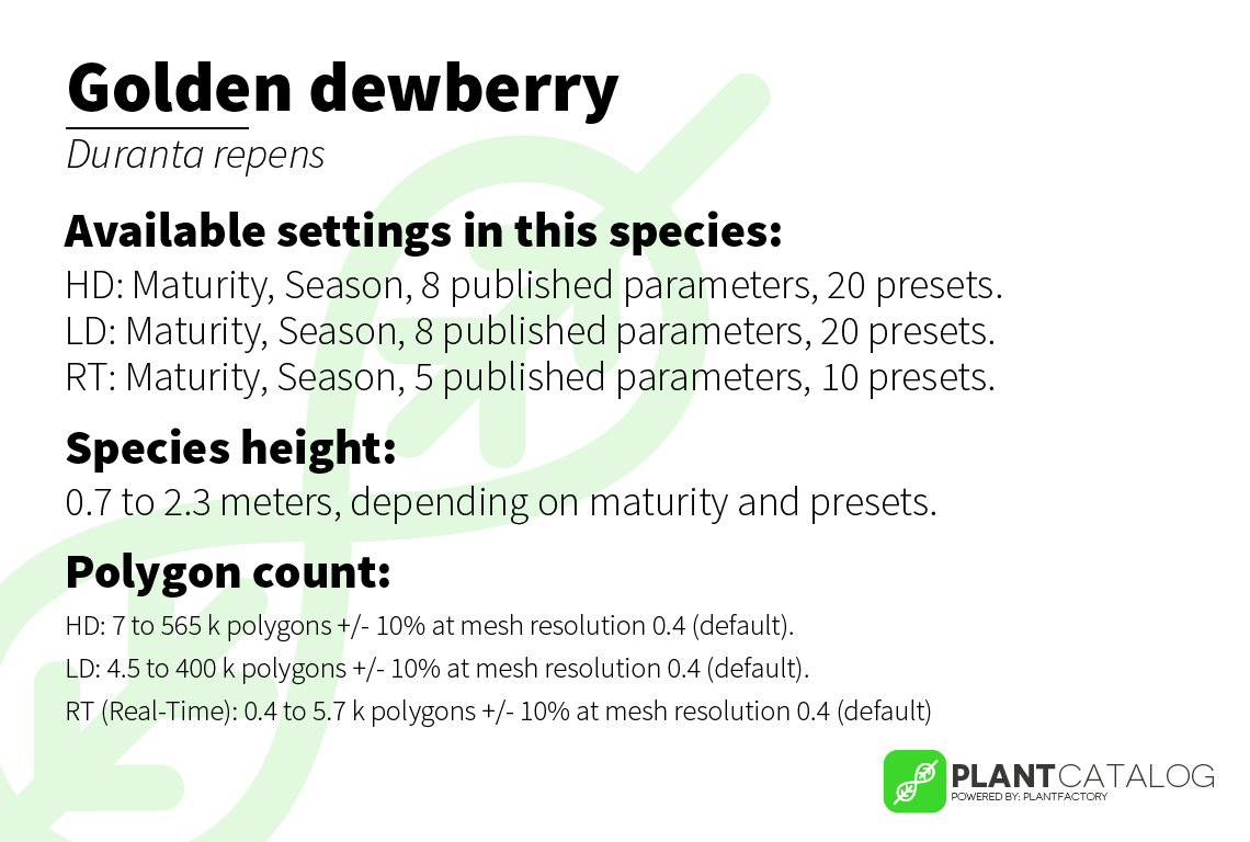 Golden dewberry - Duranta repens - 3D model specifications