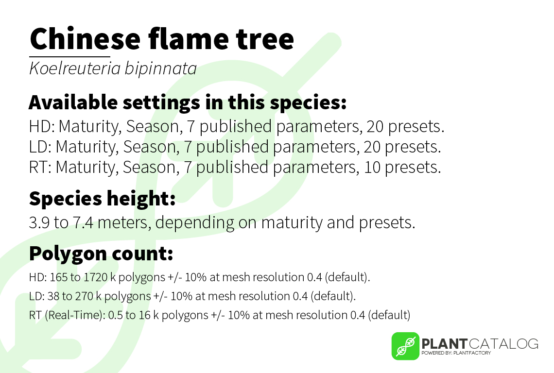 Chinese flame tree - Koelreuteria bipinnata - 3D model specifications