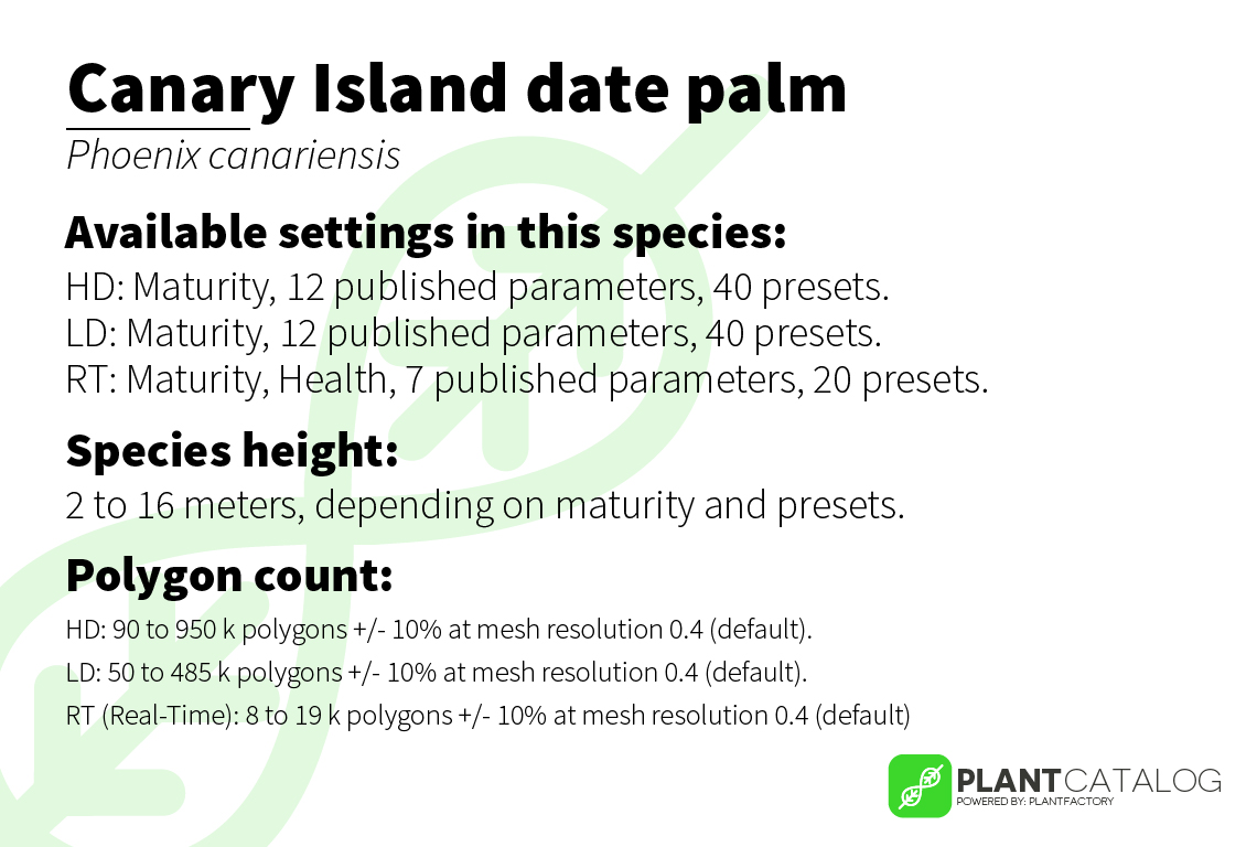 Canary Island date palm - Phoenix canariensis - 3D model specifications