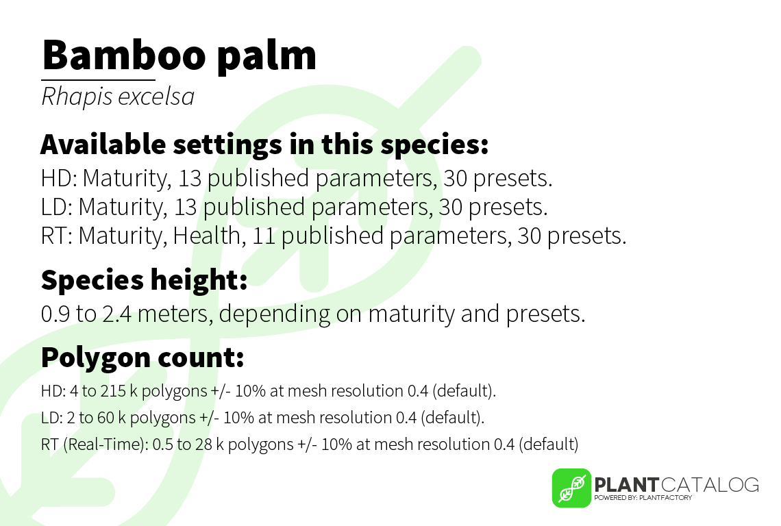 Bamboo palm - Rhapis excelsa - 3D model specifications