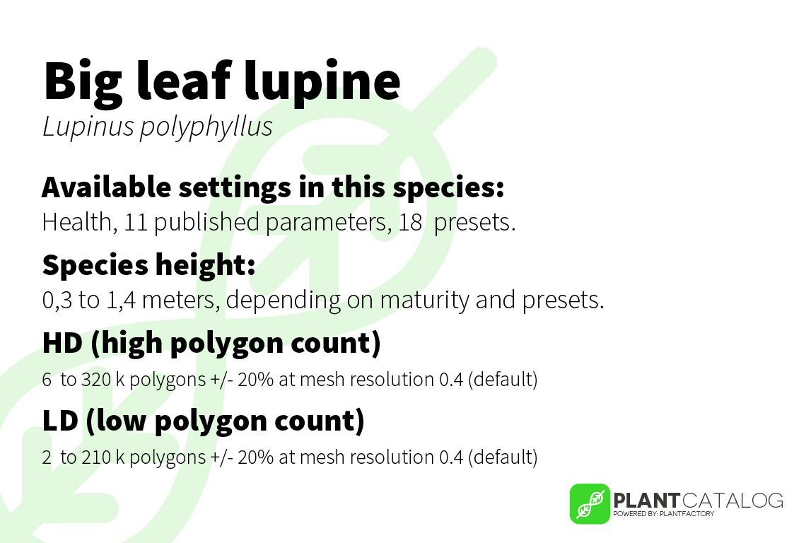 Large-leaved lupine - Lupinus polyphyllus - 3D model specifications