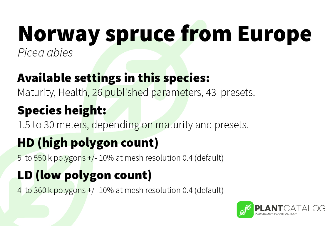 Norway spruce - Picea abies - 3D model specifications