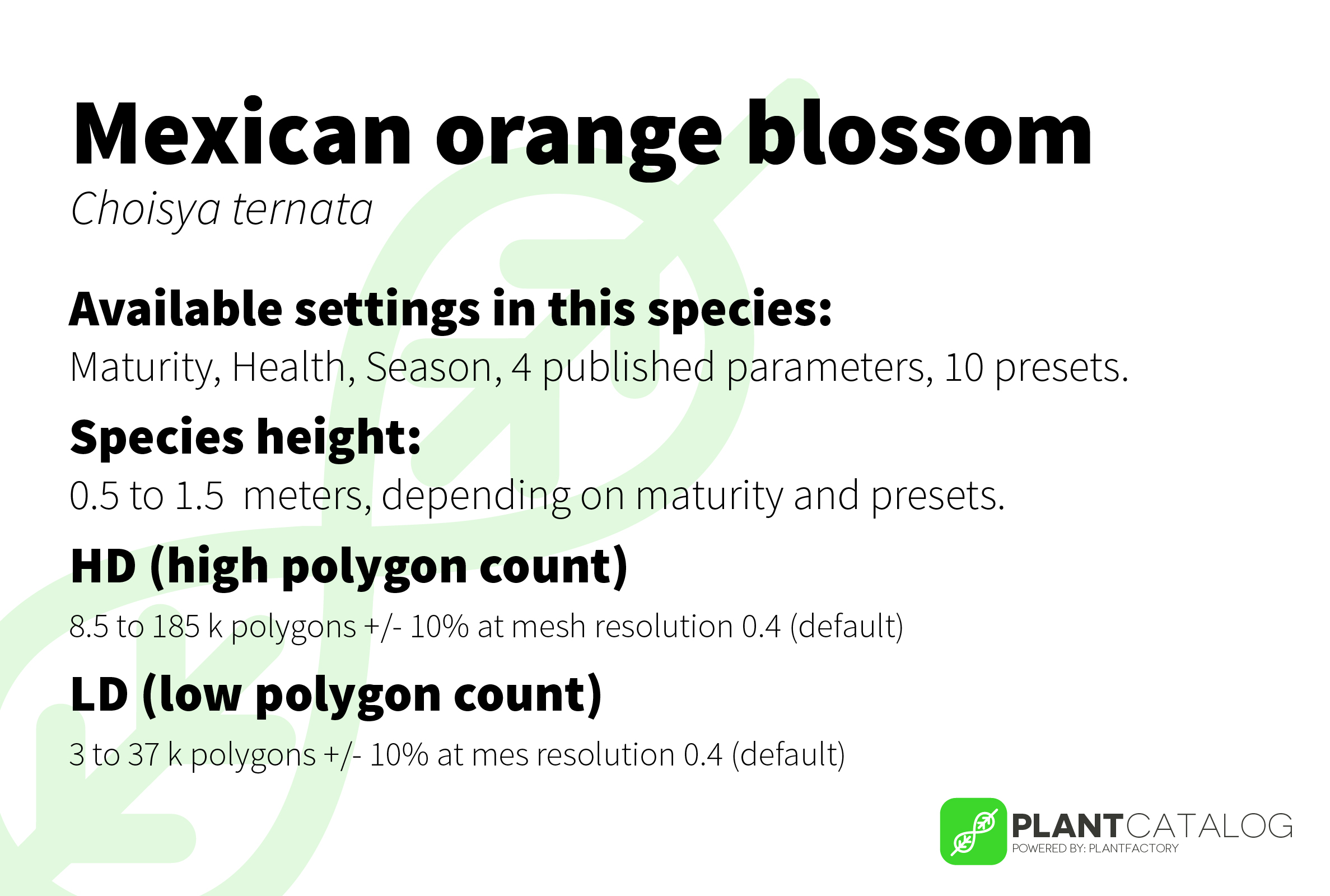 Mexican orange blossom - Choisya ternata - 3D model specifications