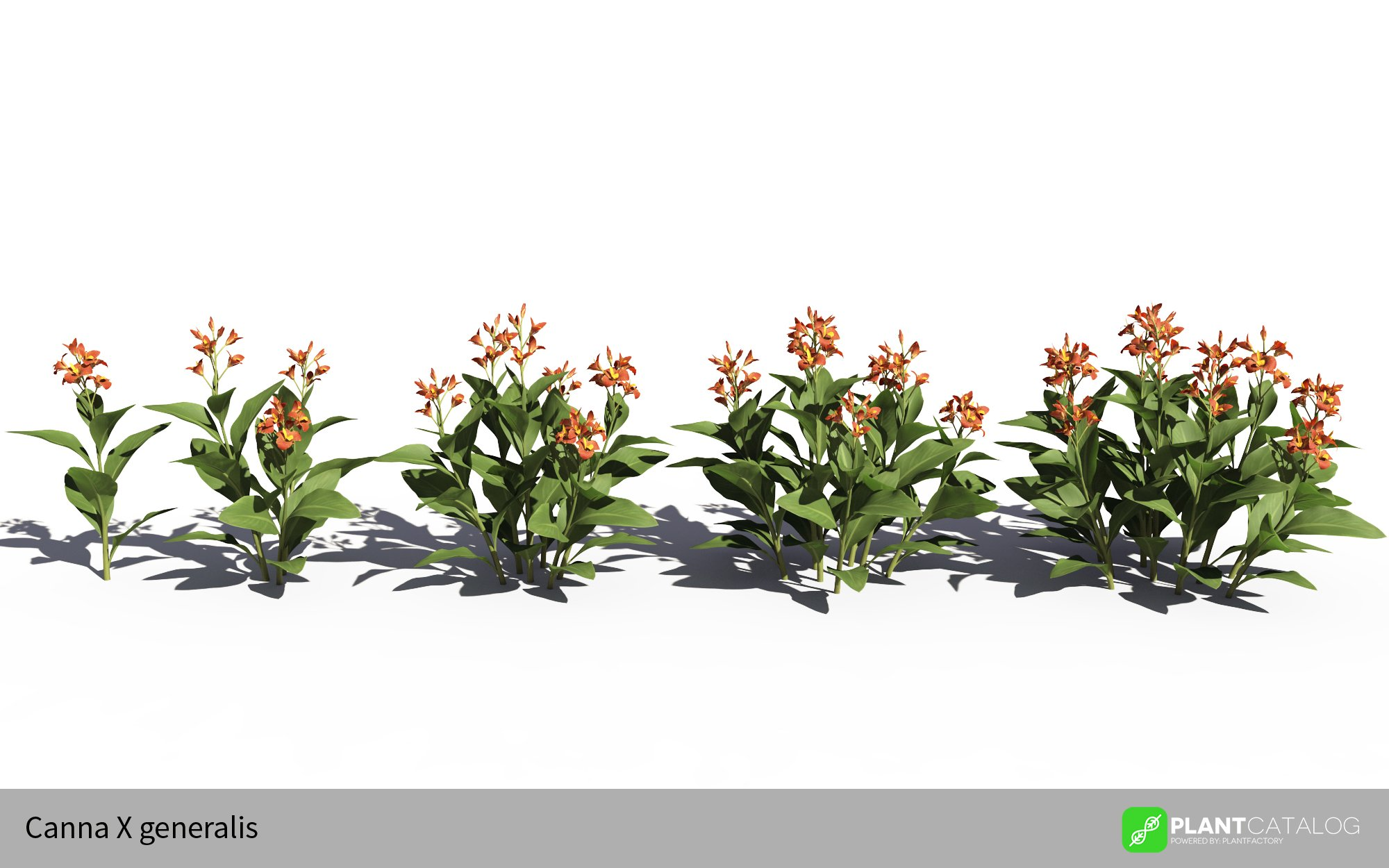 3D model of the Canna lily - Canna X generalis orange - from the PlantCatalog, rendered in VUE