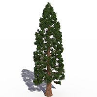 3D model of the Giant sequoia - Sequoiadendron giganteum - from the PlantCatalog, rendered in VUE