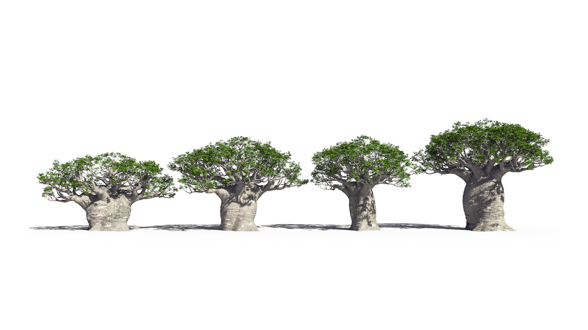 3D model of the African continental baobab Adansonia digitata different presets