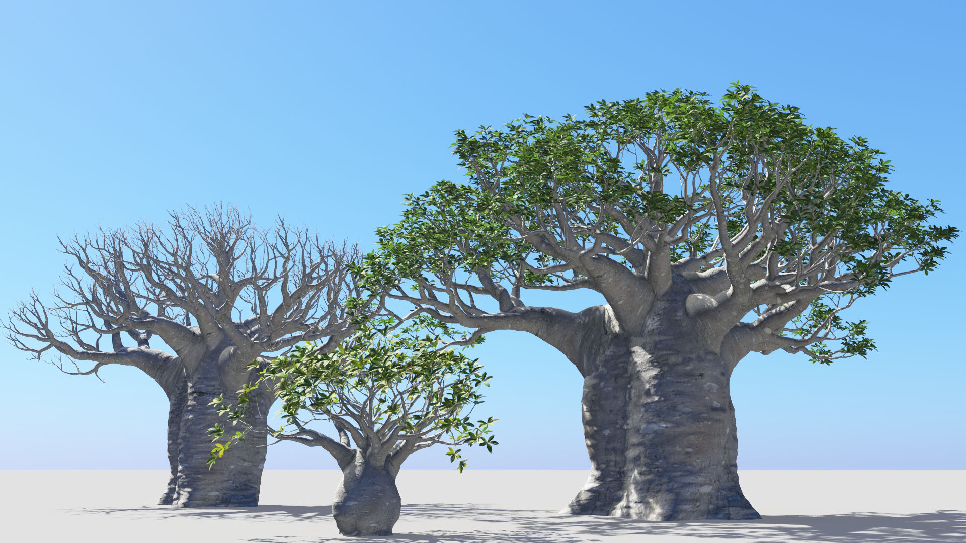 3D model of the African continental baobab Adansonia digitata