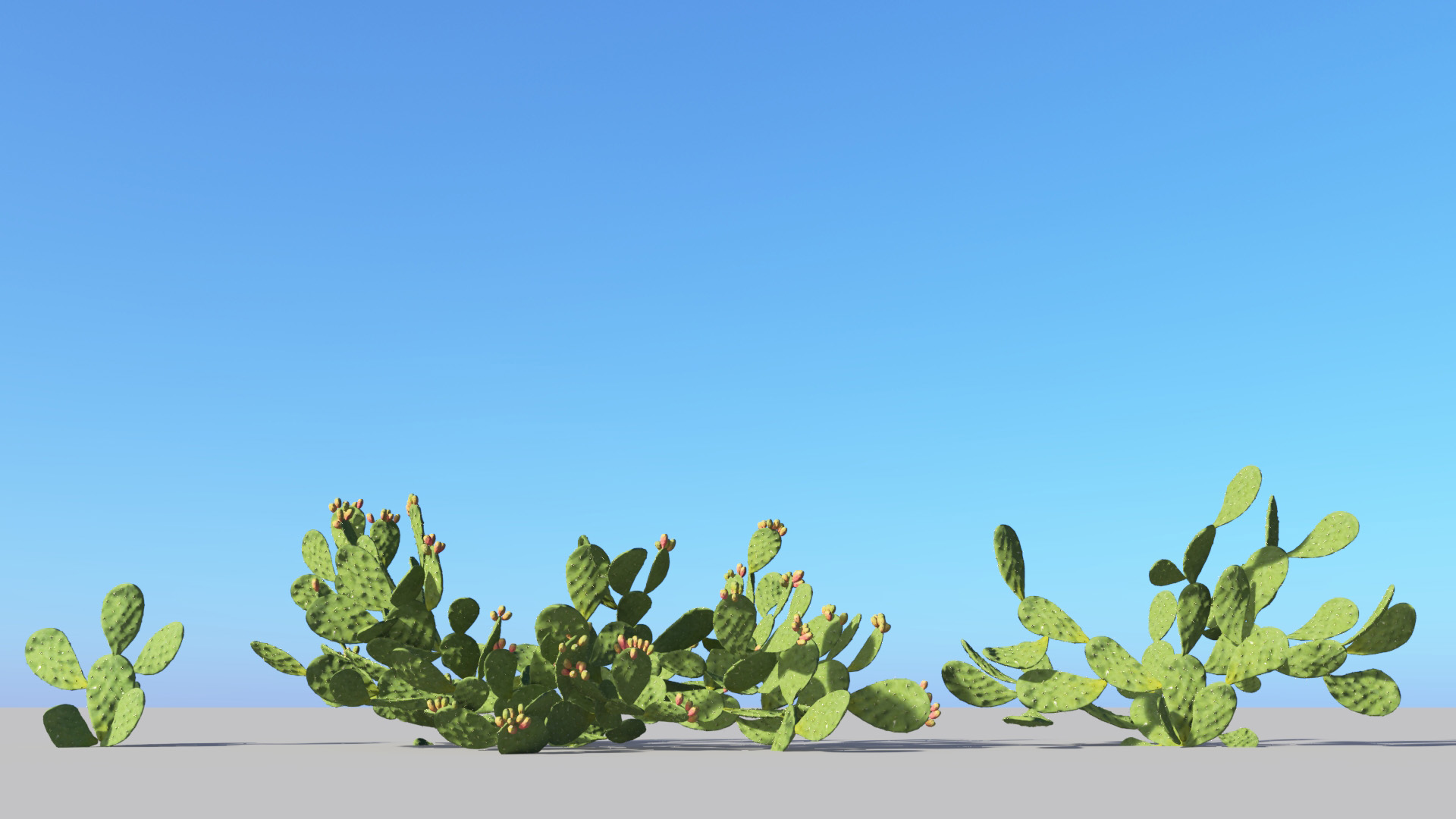 3D model of the Barbary fig Opuntia ficus-indica