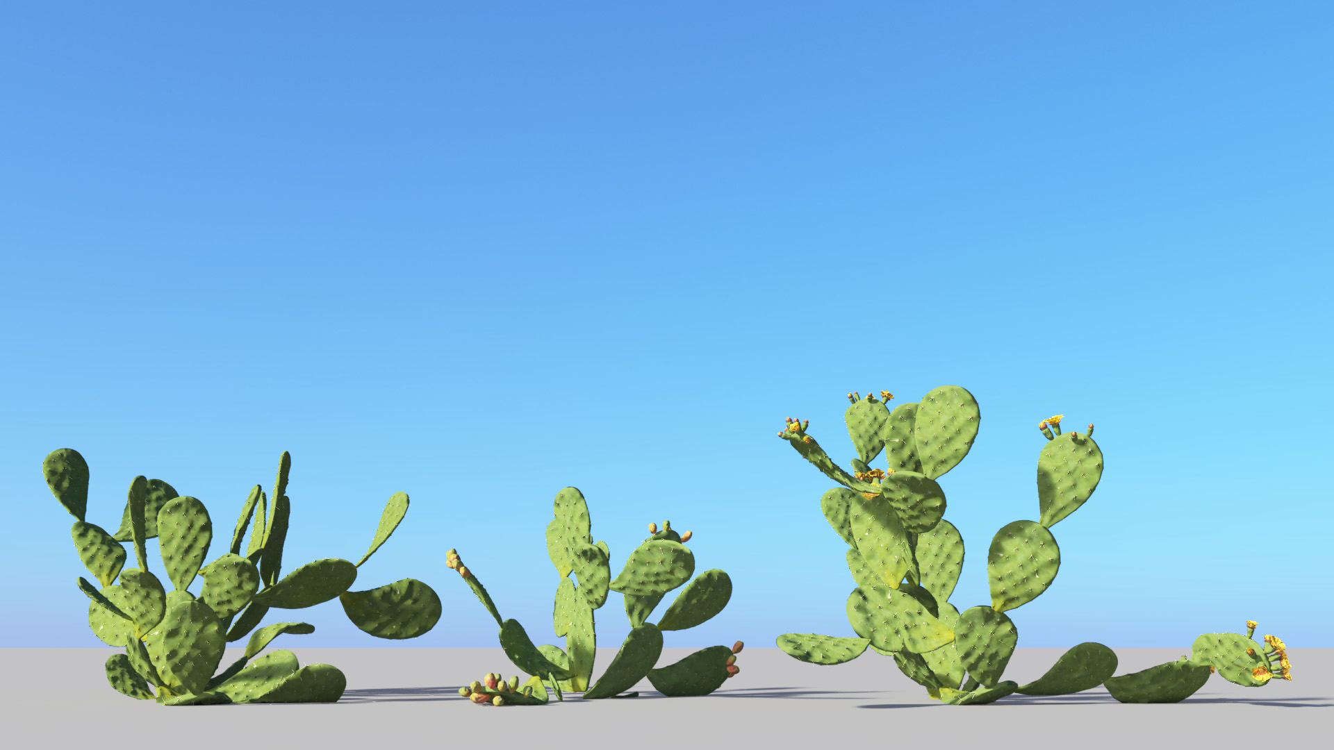 3D model of the Barbary fig Opuntia ficus-indica different presets