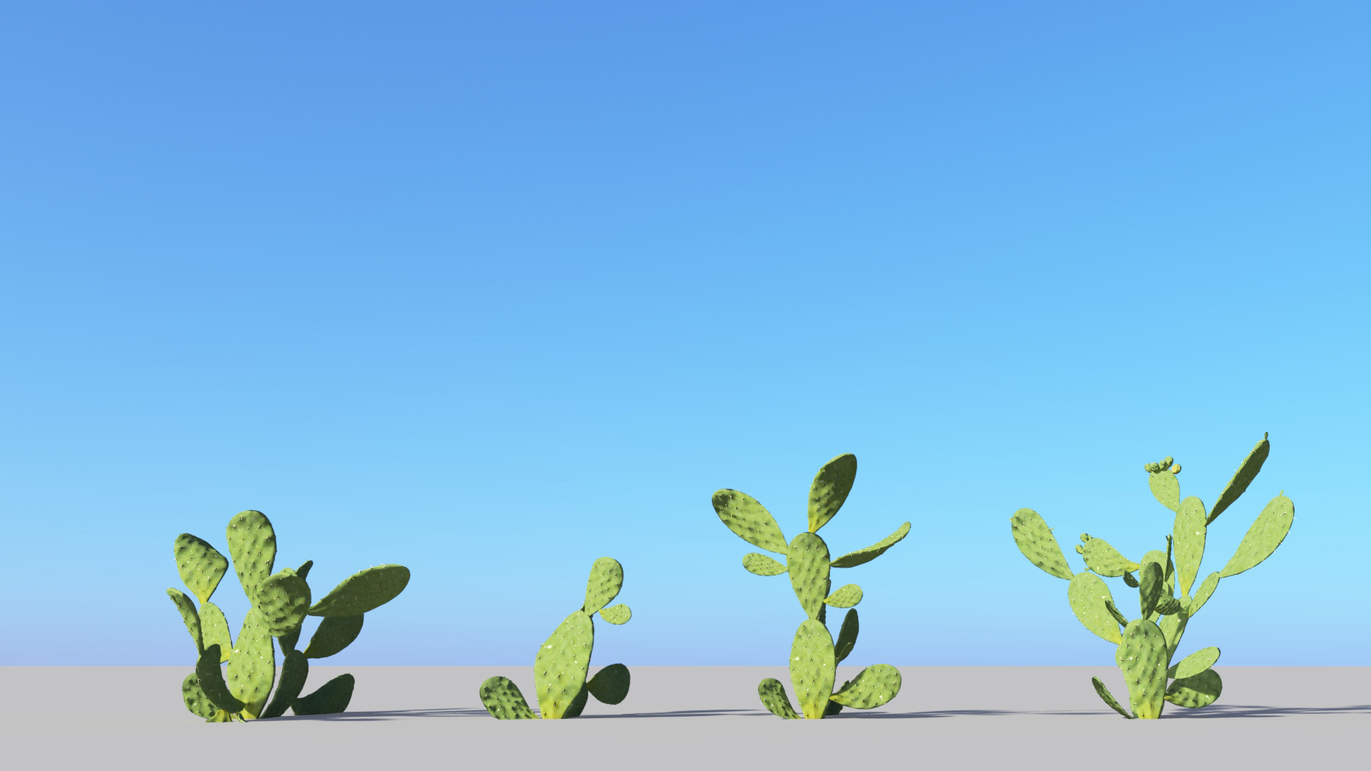 3D model of the Barbary fig Opuntia ficus-indica published parameters