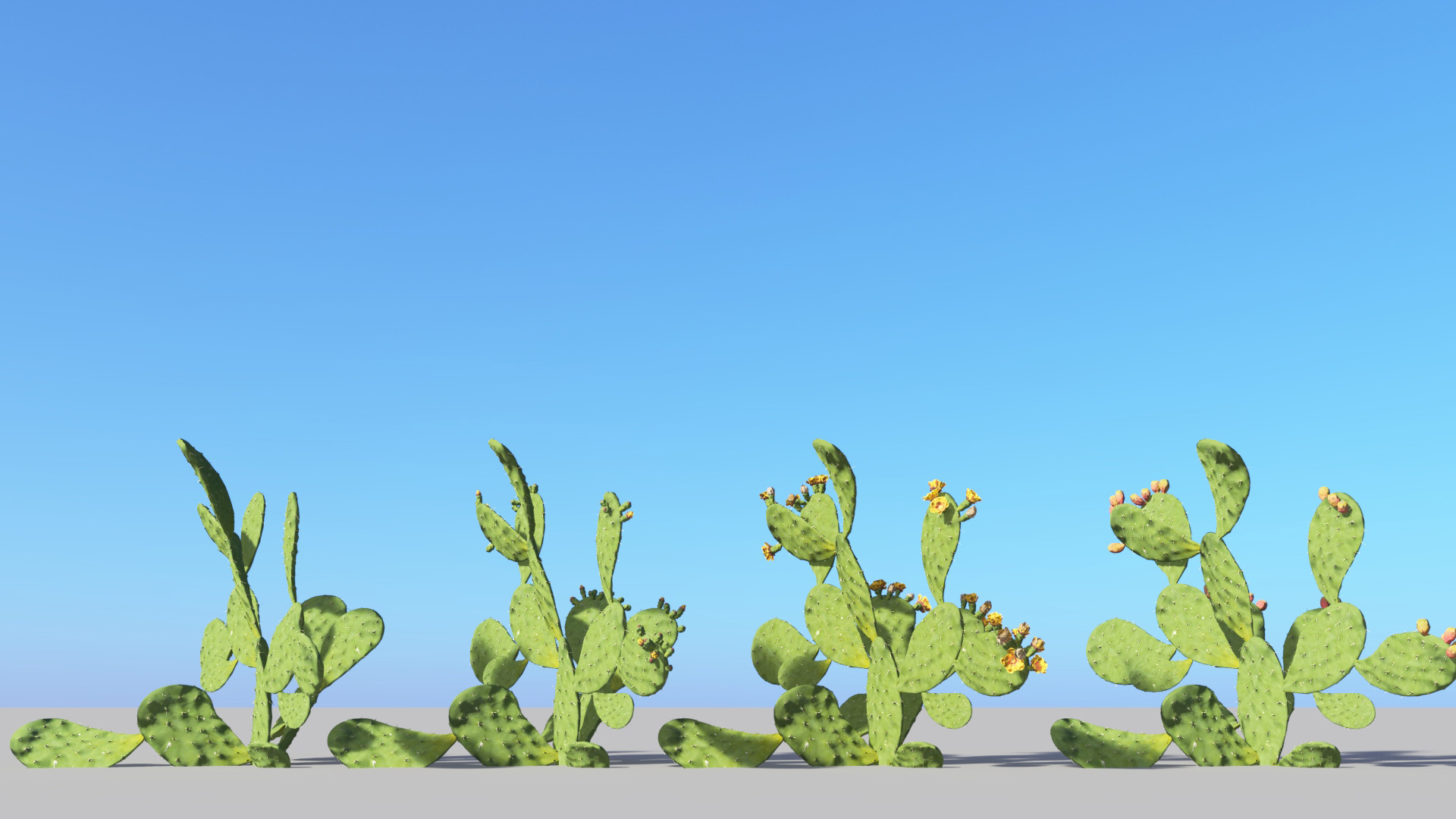 3D model of the Barbary fig Opuntia ficus-indica season variations