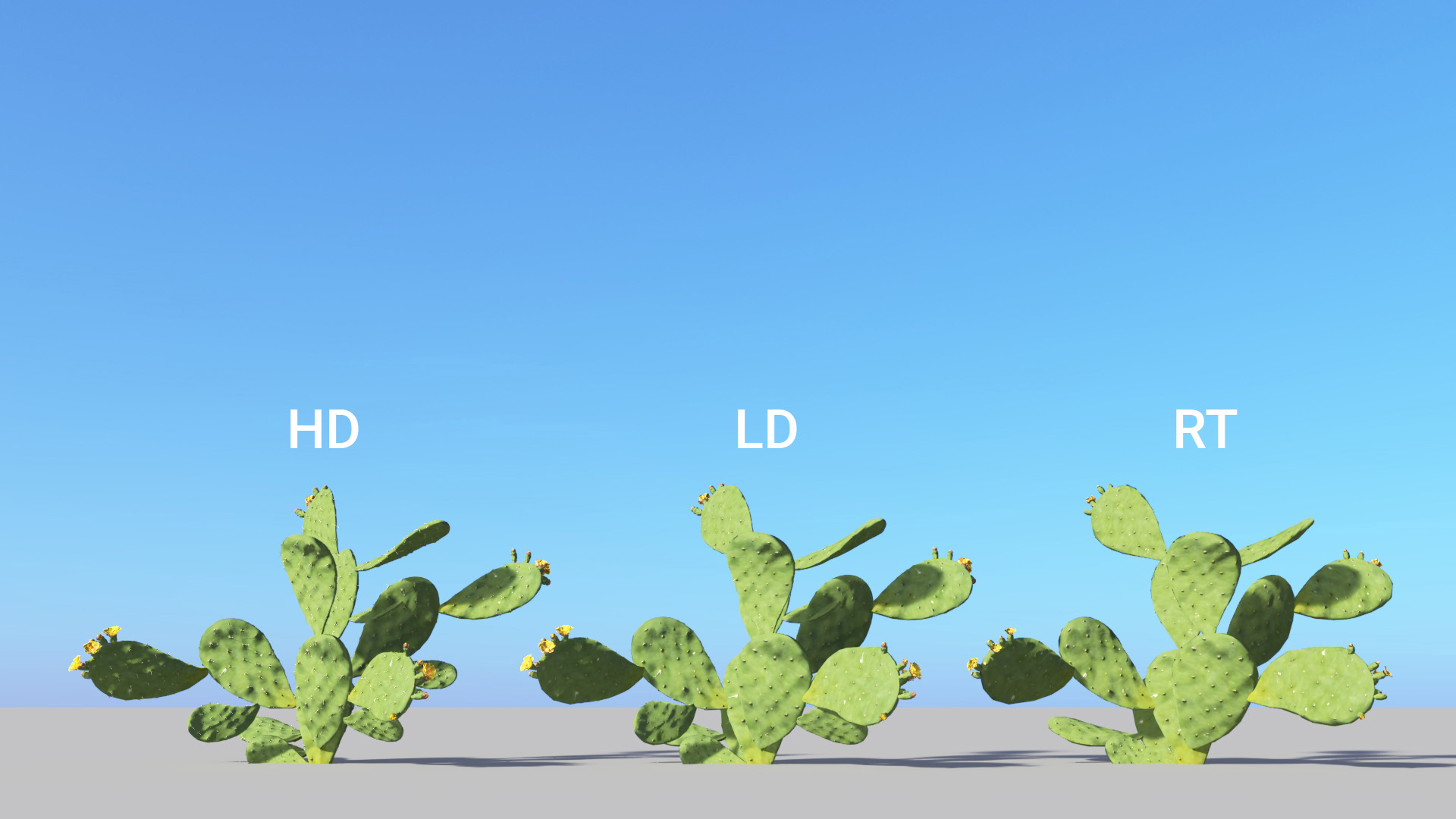 3D model of the Barbary fig Opuntia ficus-indica included versions