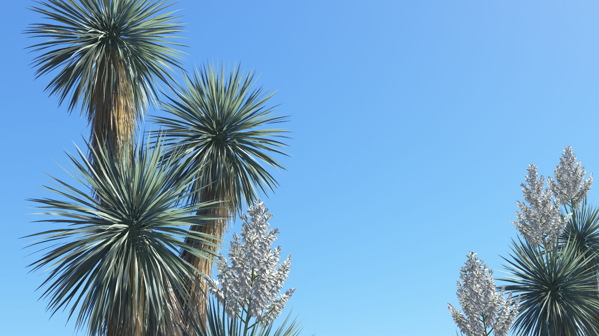 3D model of the Beaked yucca Yucca rostrata close-up