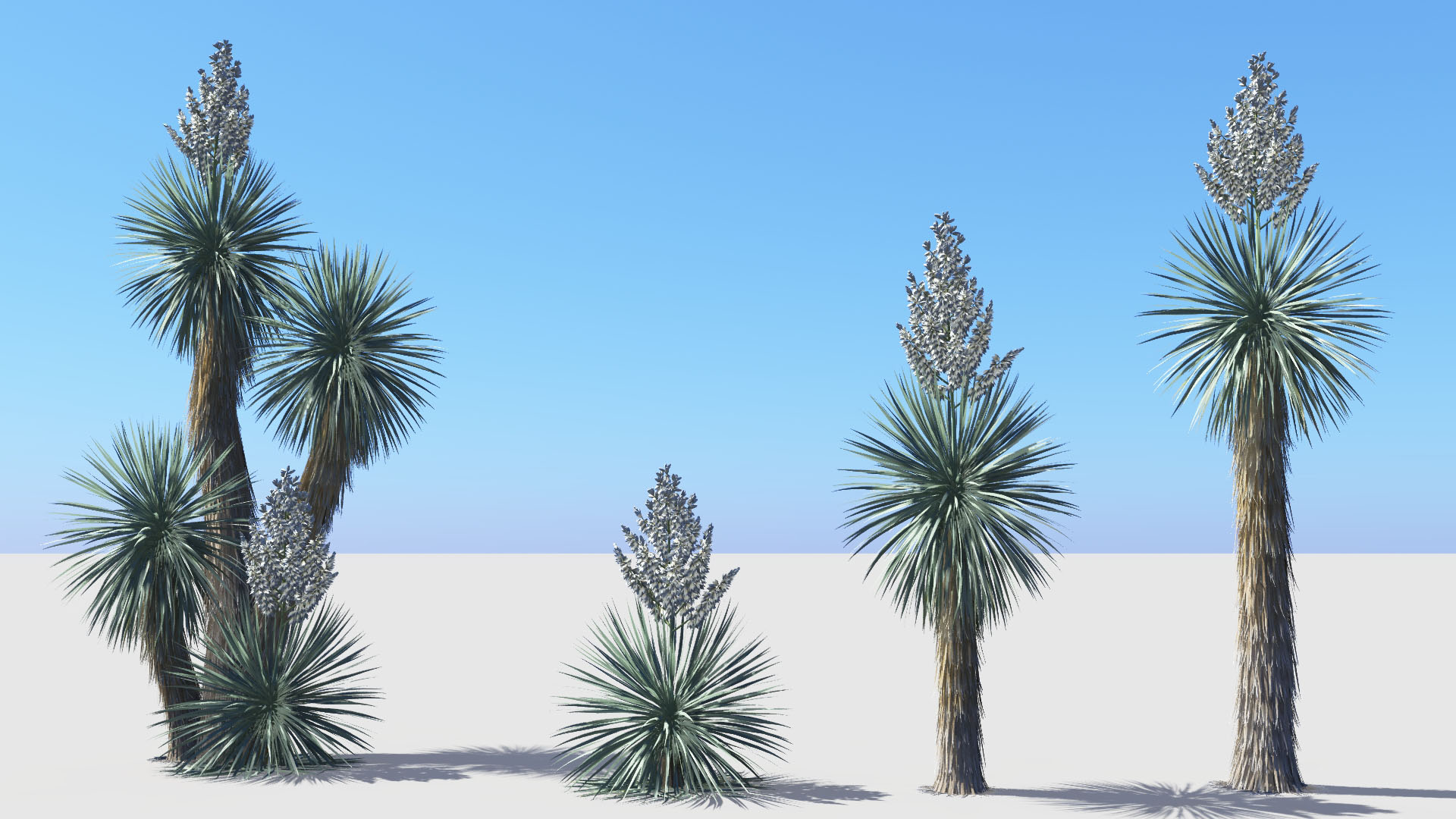3D model of the Beaked yucca Yucca rostrata