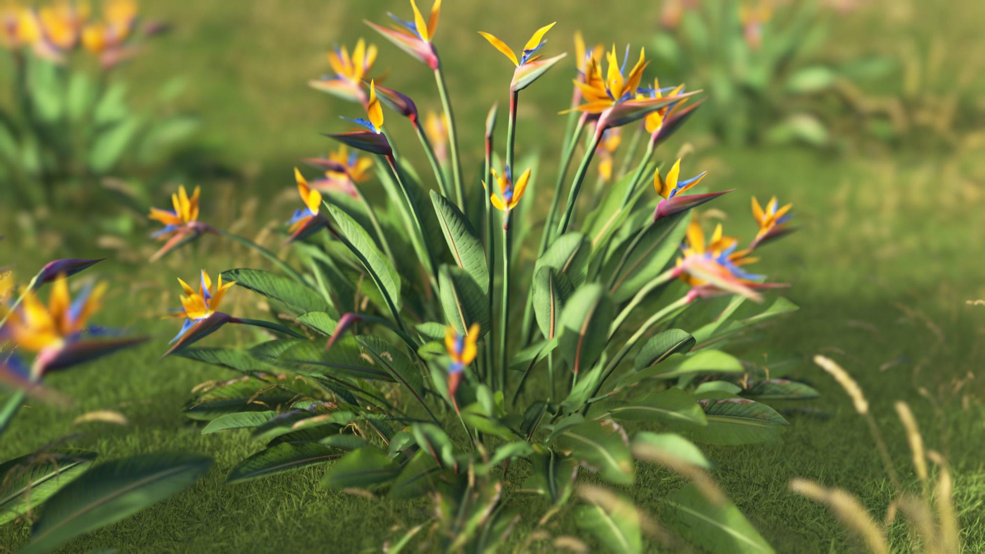 3D model of the Bird of paradise Strelitzia reginae close-up