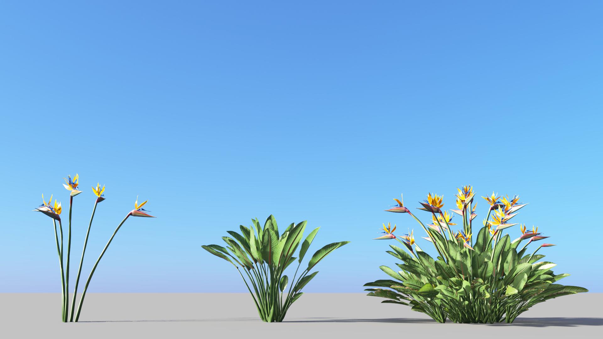 3D model of the Bird of paradise Strelitzia reginae
