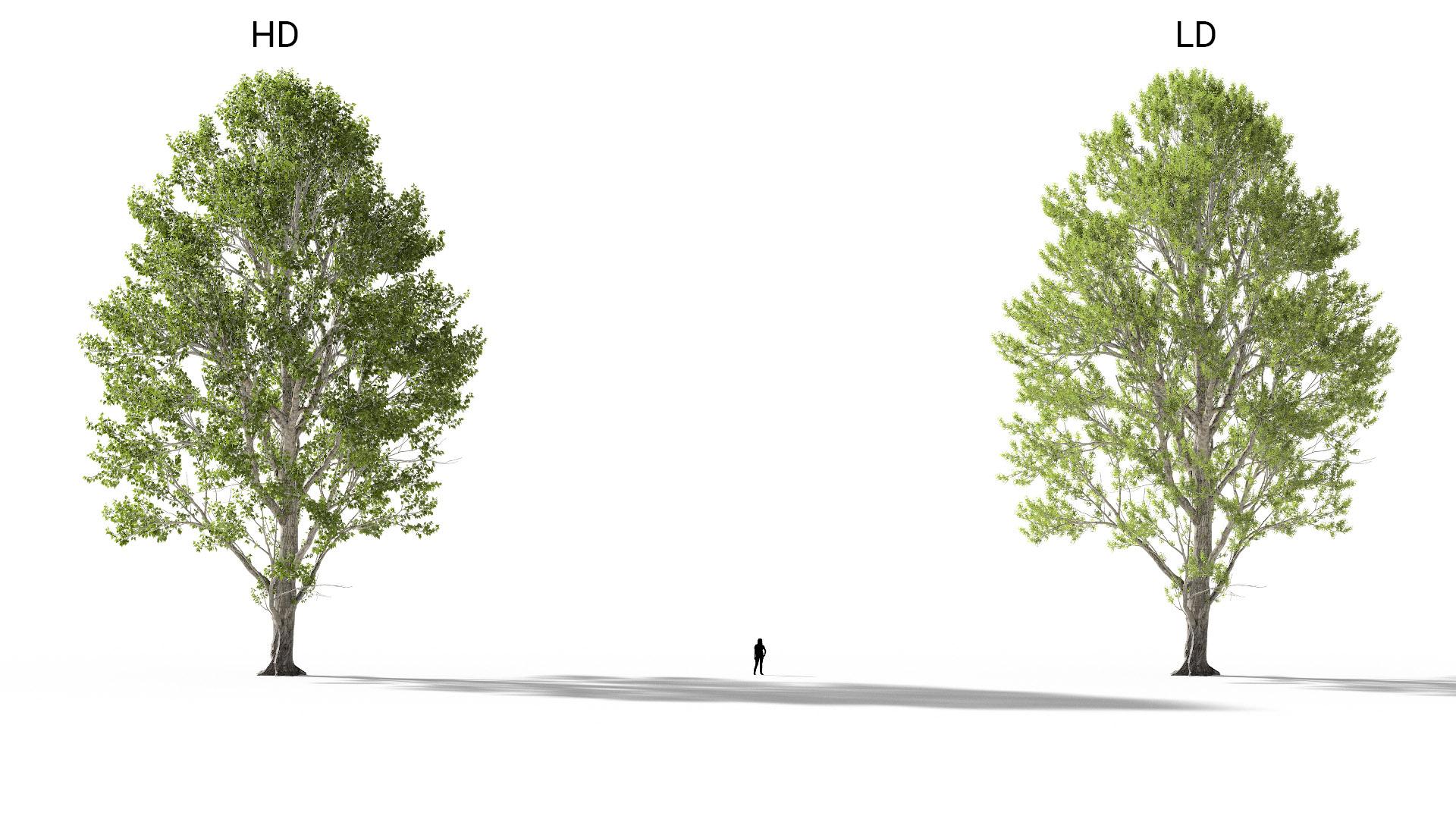 3D model of the Black poplar Populus nigra included versions