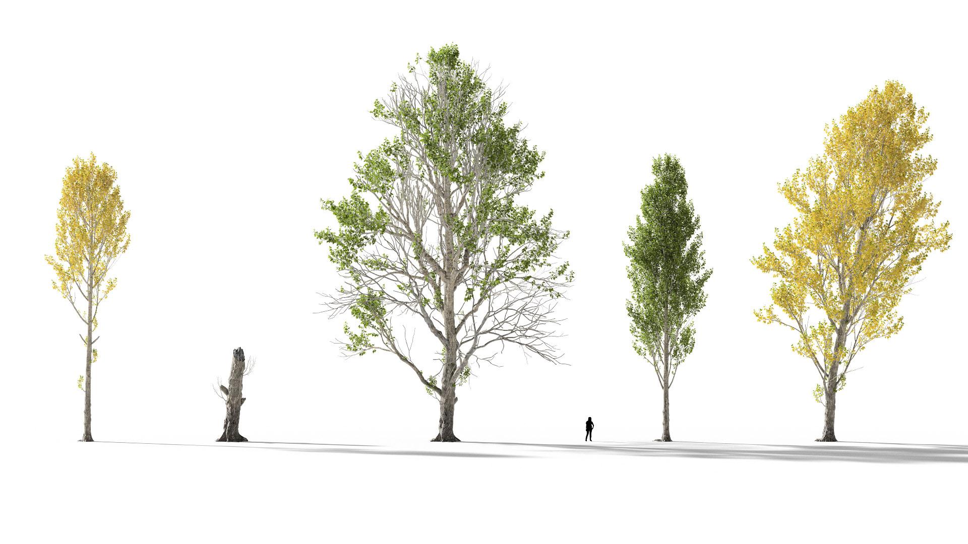 3D model of the Black poplar Populus nigra different presets