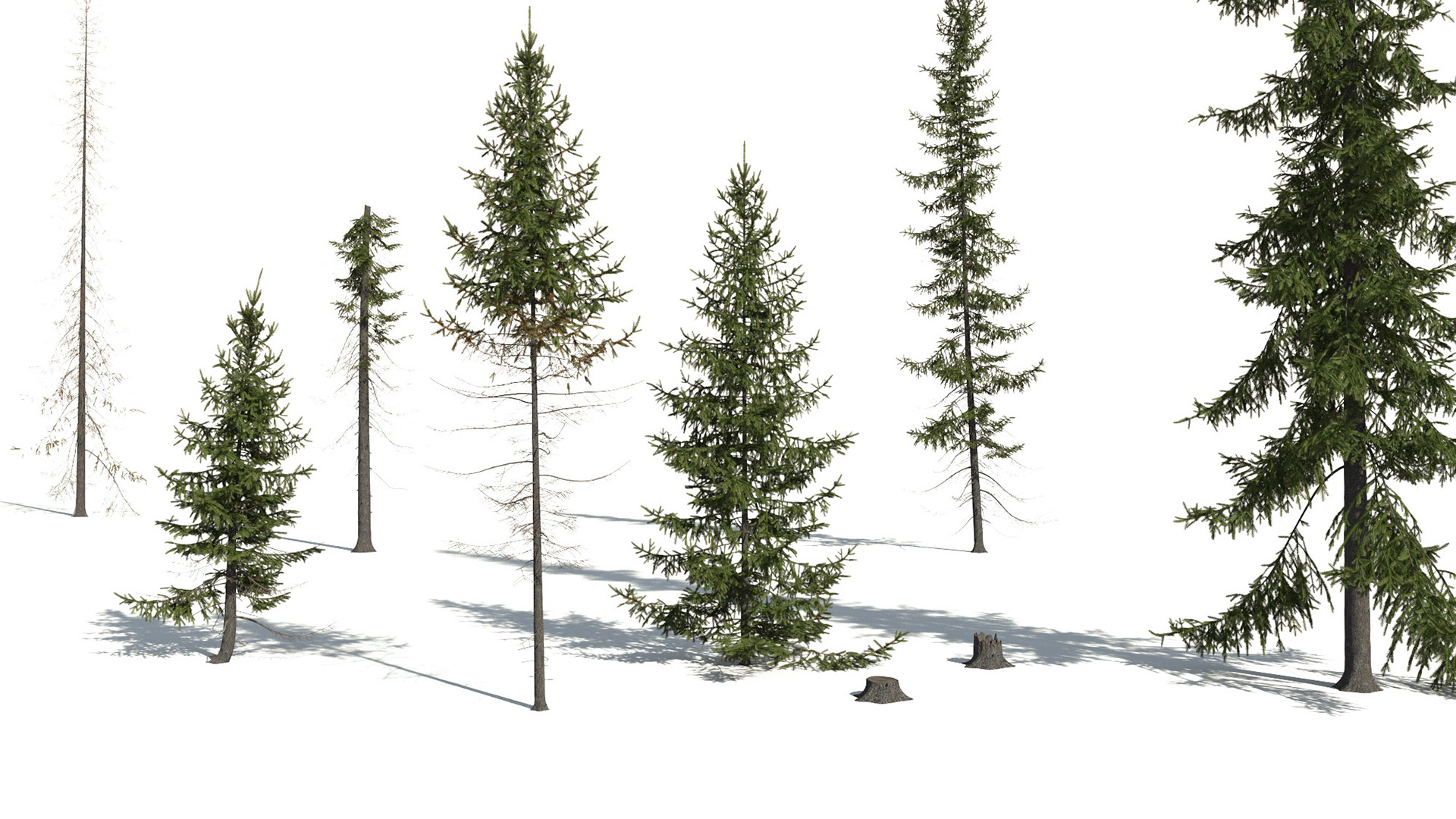 3D model of the Black spruce Picea mariana different presets