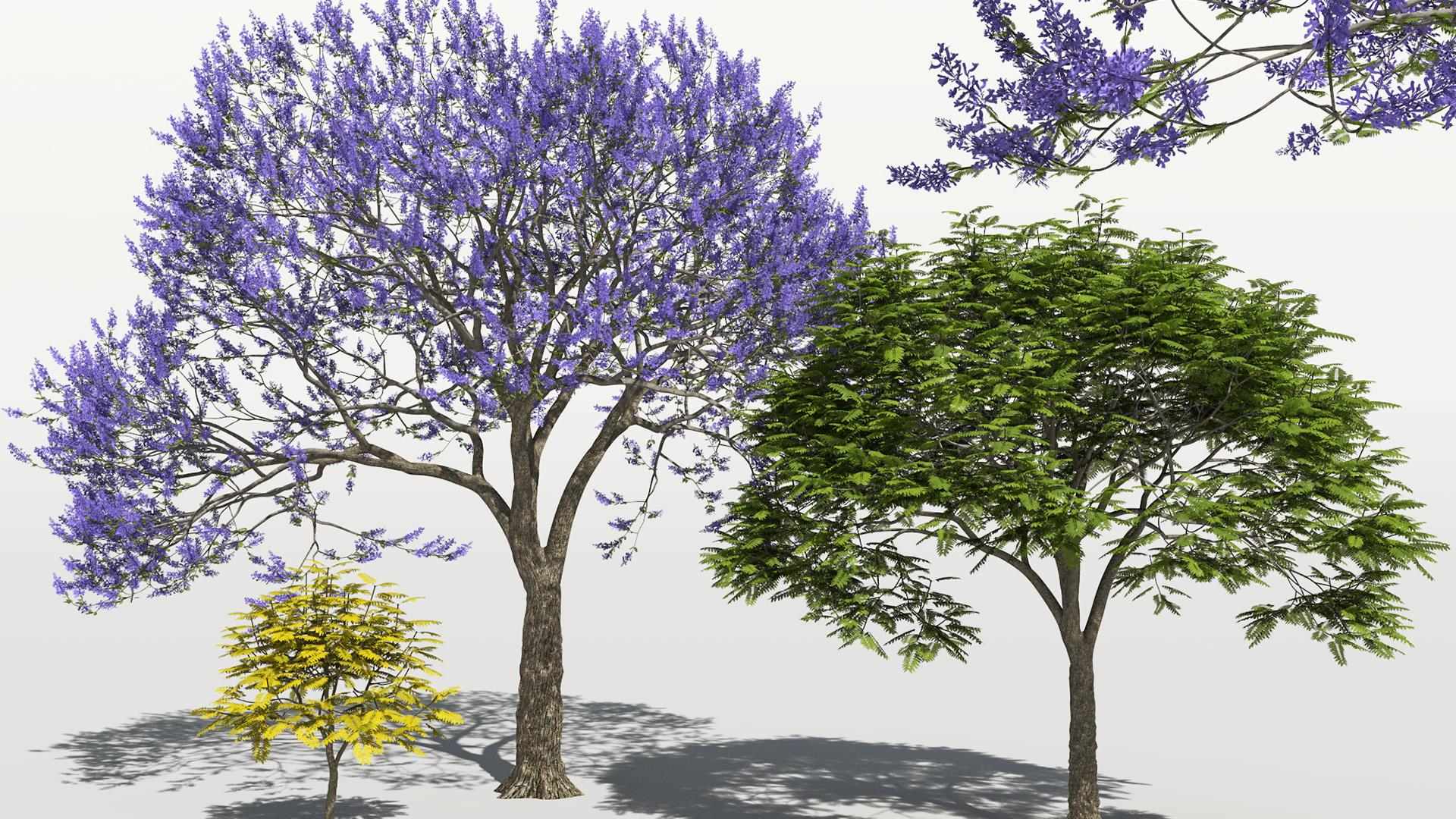 3D model of the Blue jacaranda Jacaranda mimosifolia different presets