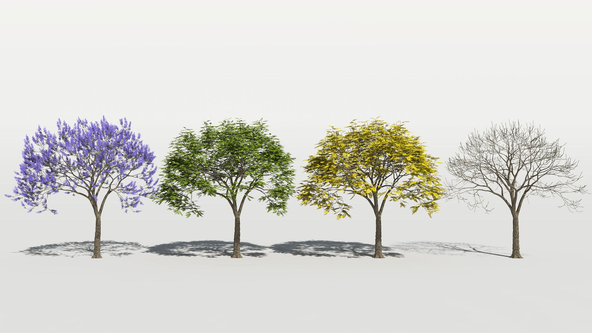 3D model of the Blue jacaranda Jacaranda mimosifolia season variations