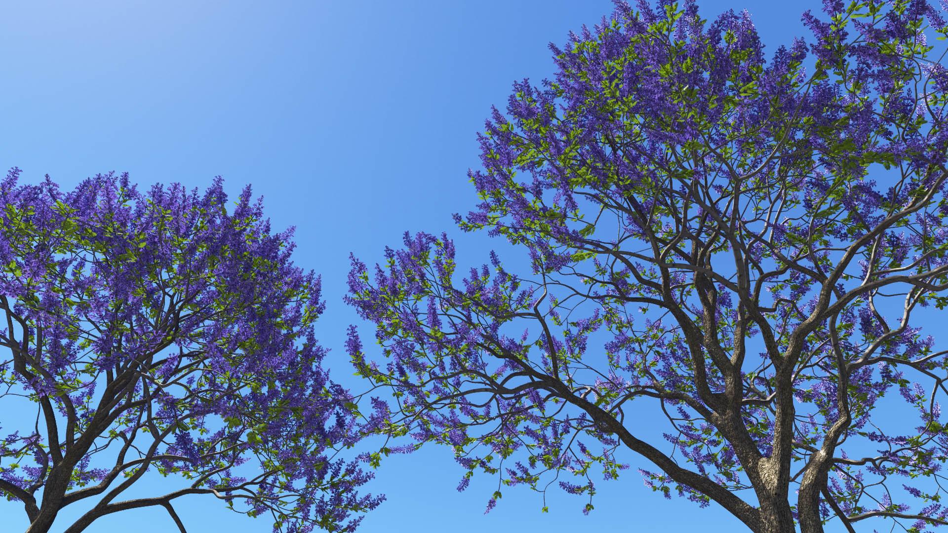 3D model of the Blue jacaranda Jacaranda mimosifolia close-up