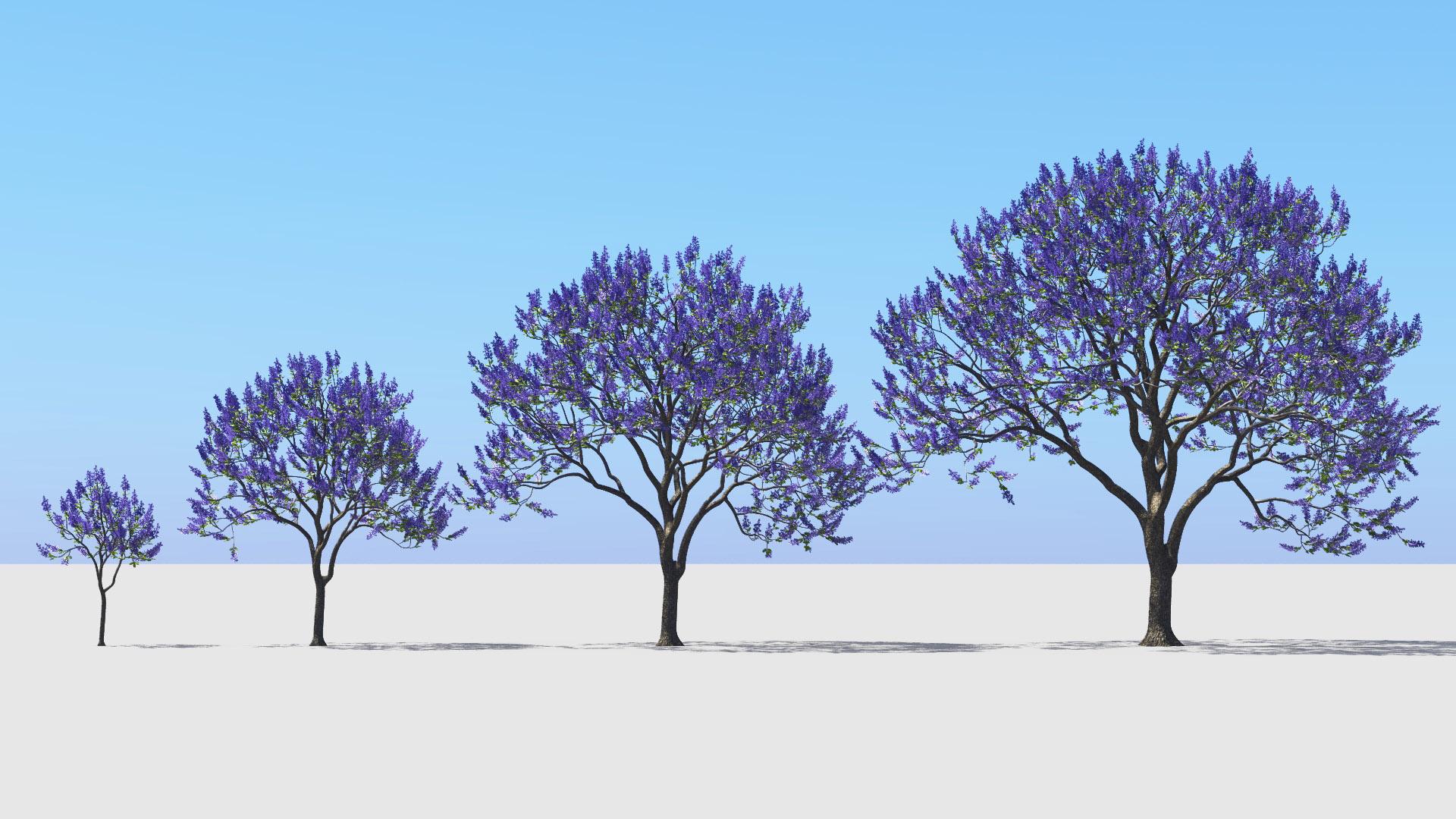 3D model of the Blue jacaranda Jacaranda mimosifolia