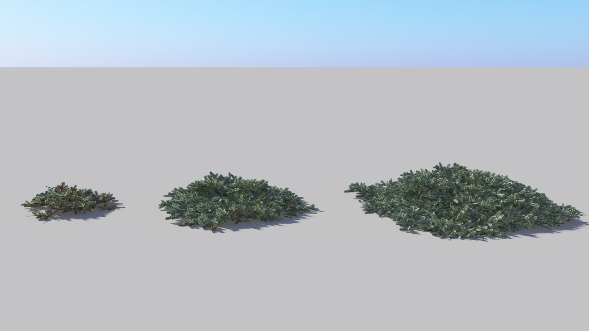 3D model of the Blue Nest spruce Picea mariana 'Ericoides'