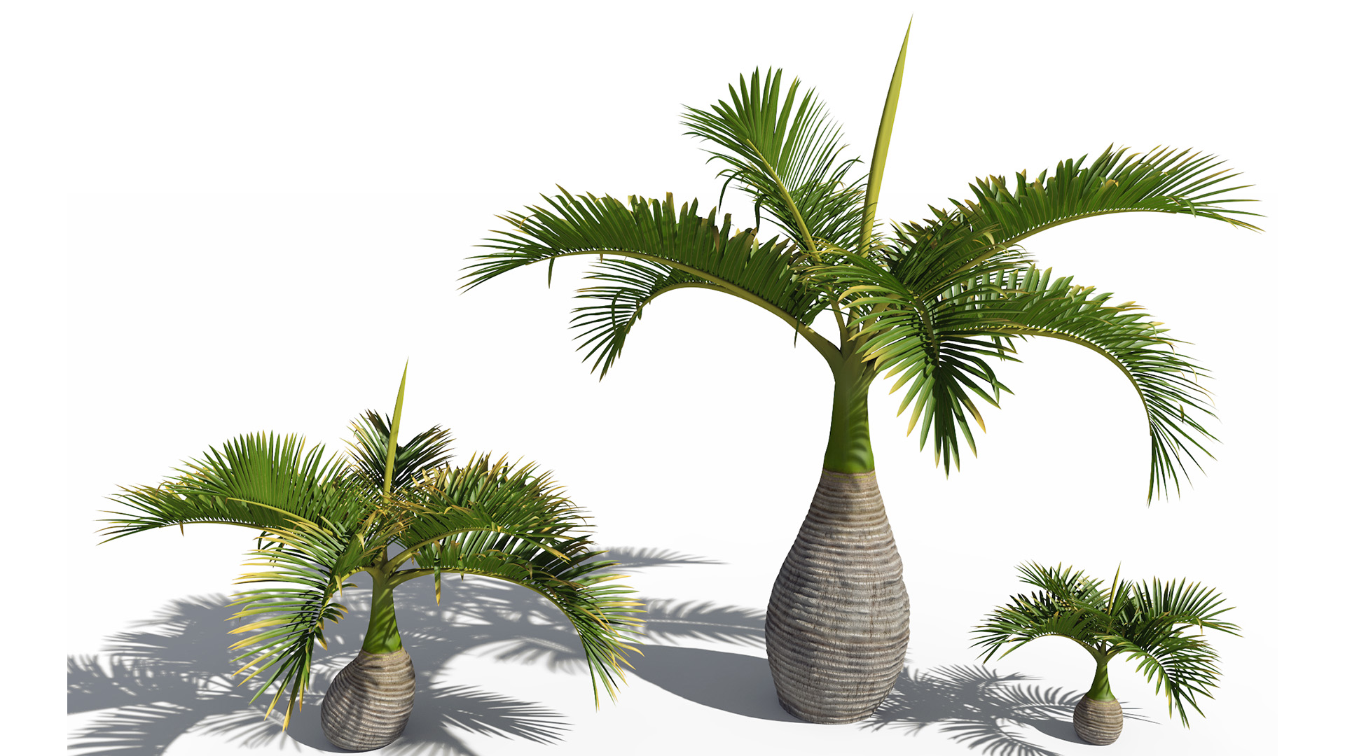 3D model of the Bottle palm Hyophorbe lagenicaulis different presets