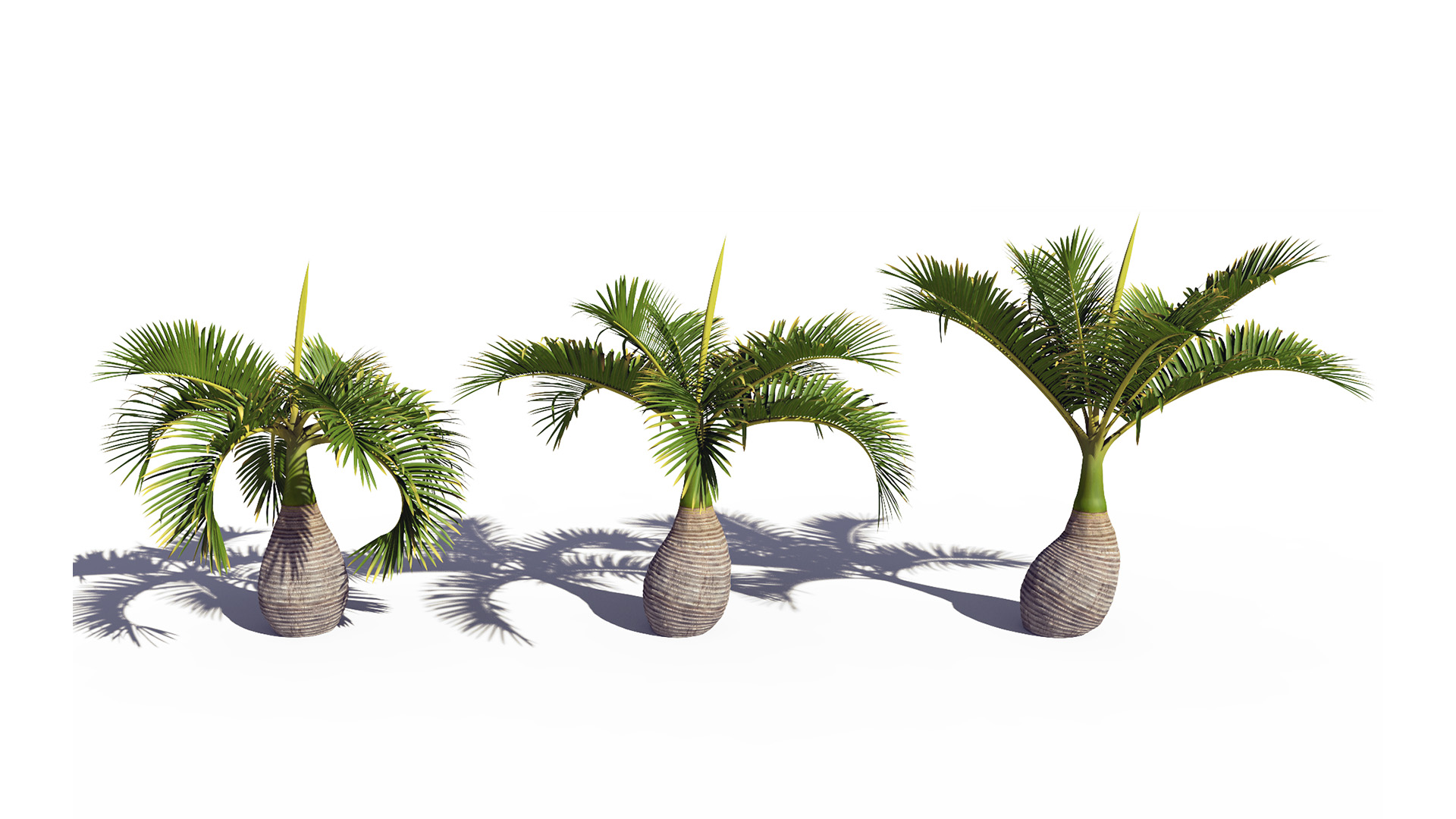 3D model of the Bottle palm Hyophorbe lagenicaulis