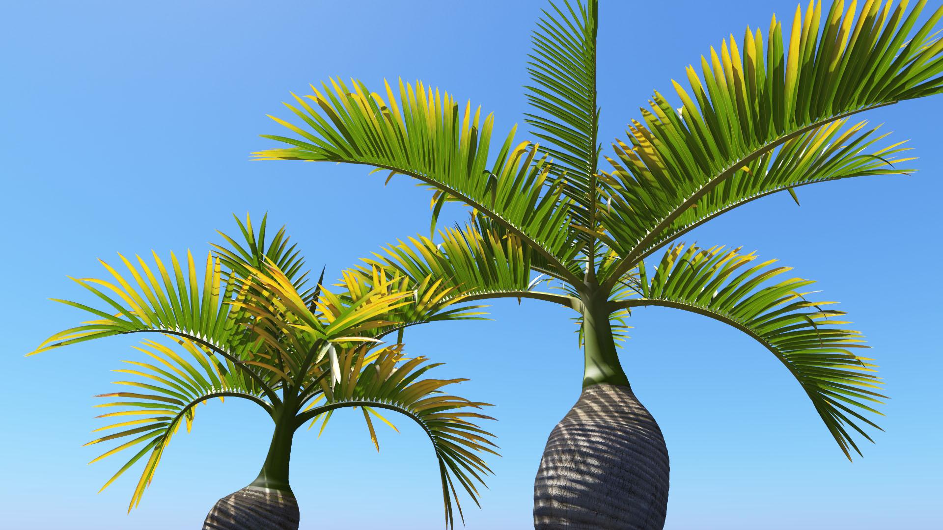 3D model of the Bottle palm Hyophorbe lagenicaulis close-up