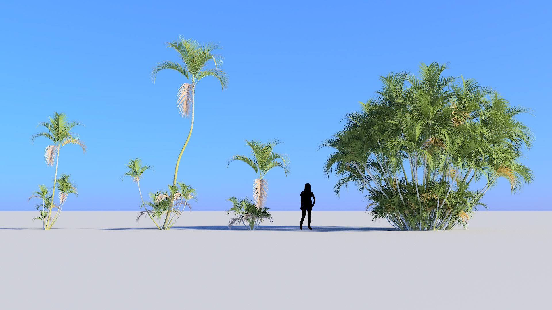 3D model of the Butterfly palm Dypsis lutescens