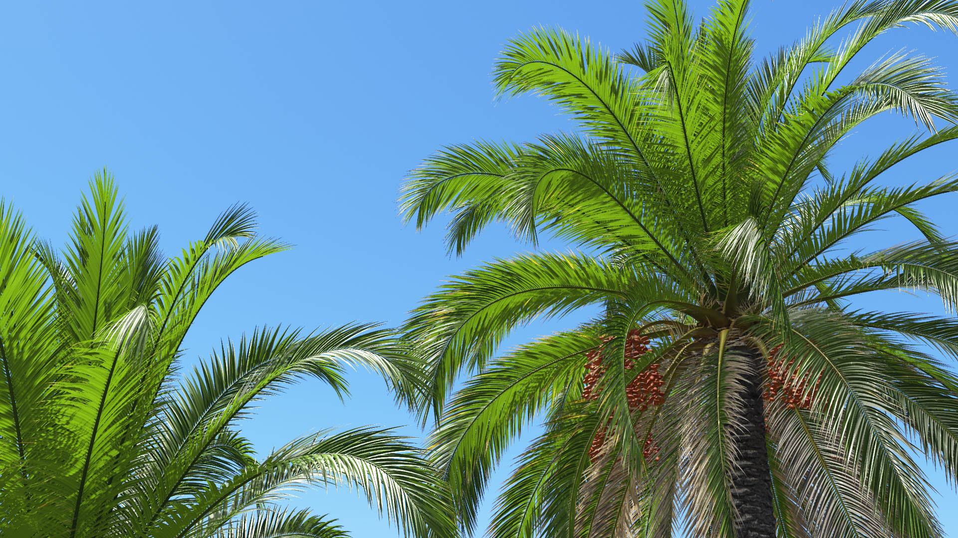 3D model of the Canary Island date palm Phoenix canariensis close-up